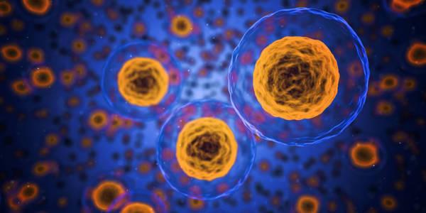 comment renforcer le système immunitaire