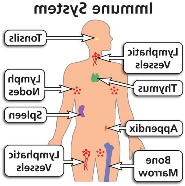 nose hair immune system